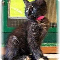 Adopt A Pet :: Alice - Shelton, WA