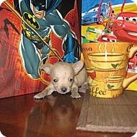 Adopt A Pet :: Teacup Sisters - Kingwood, TX