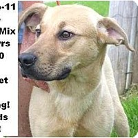Adopt A Pet :: # 168-11 - ADOPTED! - Zanesville, OH