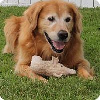 Adopt A Pet :: Huckleberry - St Louis, MO