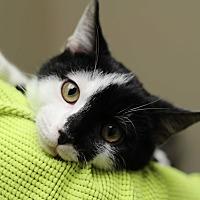 Adopt A Pet :: McQueen - Marietta, GA
