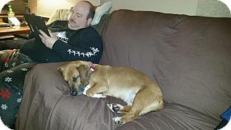 Basset Hound Mix Dog for adoption in Rexford, New York - Emma