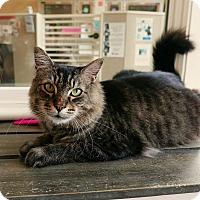 Adopt A Pet :: Emmett - Kingston, WA