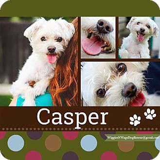 Maltese/Yorkie, Yorkshire Terrier Mix Dog for adoption in Loma Linda, California - Casper