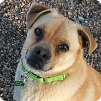 Adopt A Pet :: Otis - Newell, IA