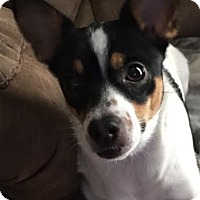 Adopt A Pet :: Daisy 2 - Trenton, NJ