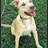 Adopt A Pet :: Buddy - High Point, NC