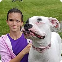 Adopt A Pet :: Harley - Elyria, OH