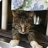 Adopt A Pet :: Wilfred - Chippewa Falls, WI