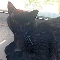Adopt A Pet :: Diego - Mississauga, Ontario, ON