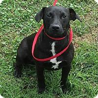 Adopt A Pet :: Butch - Minneapolis, MN