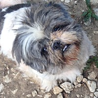 Adopt A Pet :: Nelly - Chesterfield, MO