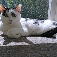 Adopt A Pet :: Sissy - Victor, NY