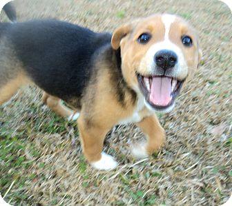 Shepherd (Unknown Type) Mix Puppy for adoption in Blountstown, Florida - Eve
