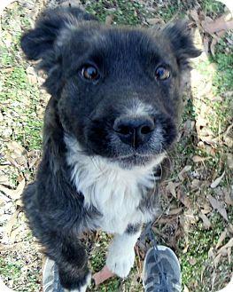 Labrador Retriever Mix Puppy for adoption in East Hartford, Connecticut - Petey meet me 4/25