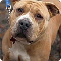 Adopt A Pet :: Mistletoe - Tinton Falls, NJ