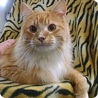 Adopt A Pet :: Frederick - Centralia, WA