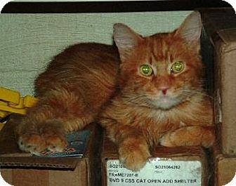 Domestic Shorthair Cat for adoption in Wetumpka, Alabama - #81304 'Bubba Stump'