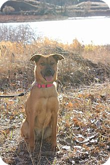 Shepherd (Unknown Type)/Terrier (Unknown Type, Medium) Mix Dog for adoption in Duchess, Alberta - Roxy
