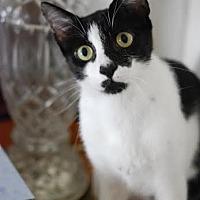 Adopt A Pet :: Chip - DFW Metroplex, TX