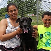 Adopt A Pet :: Voltron - Elyria, OH