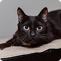 Adopt A Pet :: Cisco - Mission Hills, CA