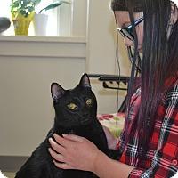 Adopt A Pet :: Silvie - Fort Riley, KS