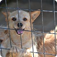 Adopt A Pet :: Chipmuck - Pikeville, MD