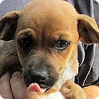Adopt A Pet :: Link - Germantown, MD