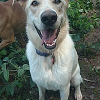 Adopt A Pet :: Tillie - Pottsville, PA