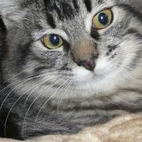 Adopt A Pet :: Rascal - Saskatoon, SK