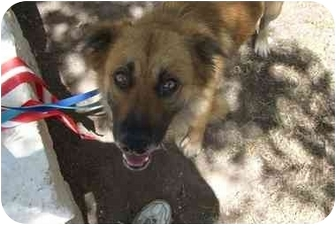 Golden Retriever/Shepherd (Unknown Type) Mix Dog for adoption in Fair Oaks Ranch, Texas - Howie