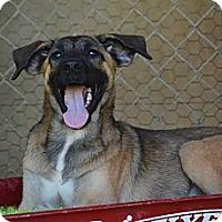 Adopt A Pet :: Gretchen - New Boston, NH