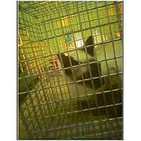 Adopt A Pet :: Bella - Owasso, OK