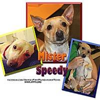 Adopt A Pet :: MISTER - Irving, TX