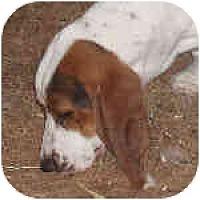 Adopt A Pet :: Madeline - Phoenix, AZ