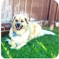 Adopt A Pet :: Roscoe - Loveland, CO