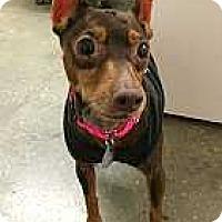 Adopt A Pet :: Chucky - Syracuse, NY