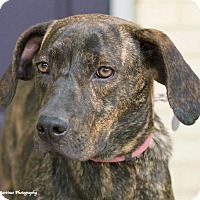 Adopt A Pet :: Gracie - Hagerstown, MD