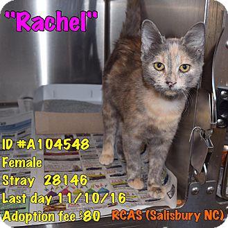 Calico Cat for adoption in Salisbury, North Carolina - Rachel