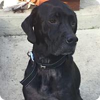 Adopt A Pet :: Cash/Crash - San Francisco, CA