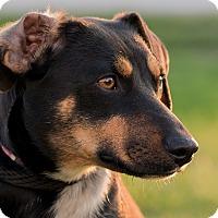 Adopt A Pet :: Vanna - Westfield, NY