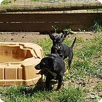 Adopt A Pet :: Breakfast club - Blue Bell, PA