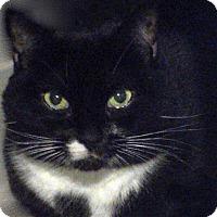 Adopt A Pet :: Dahlia (LT) - Trenton, NJ