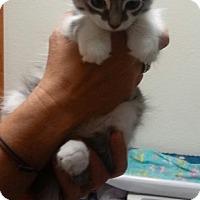 Adopt A Pet :: Bruiser - Divide, CO