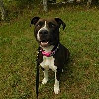 Adopt A Pet :: Ruby Rose - Cedar Creek, TX