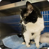 Adopt A Pet :: Ozzy - Sherwood, OR