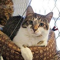 Adopt A Pet :: Doc - McPherson, KS