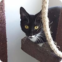 Adopt A Pet :: Riva - Orillia, ON