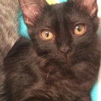 Adopt A Pet :: Midnight - Austin, TX